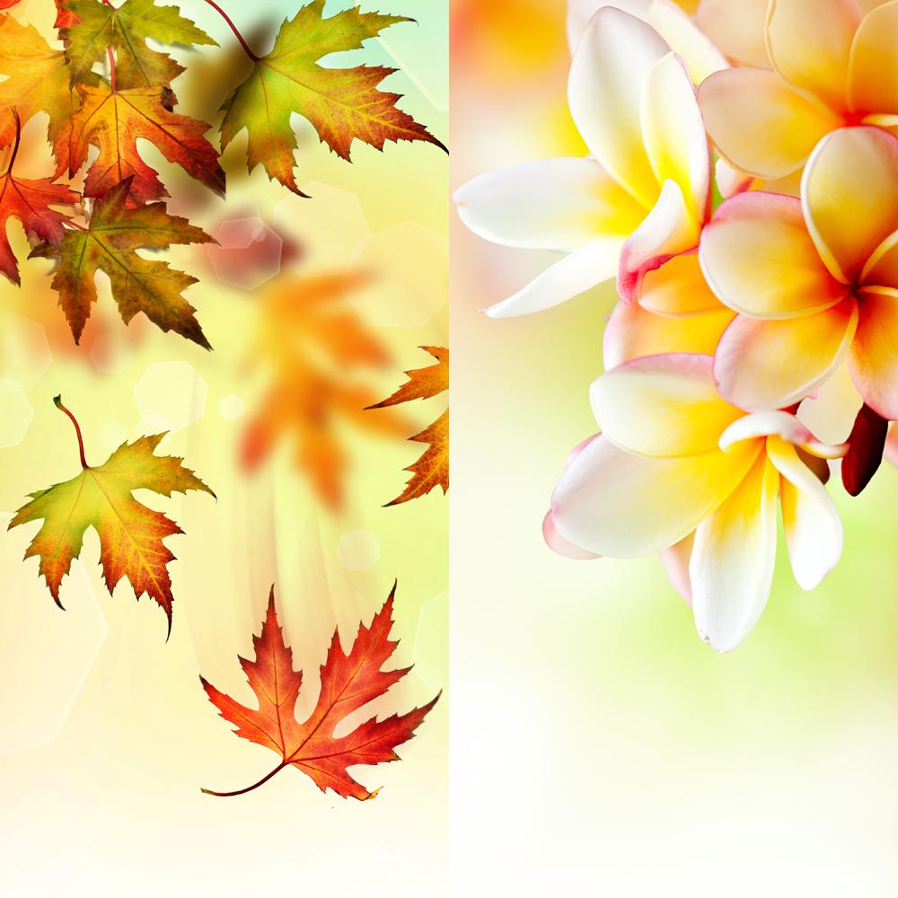 fall & spring