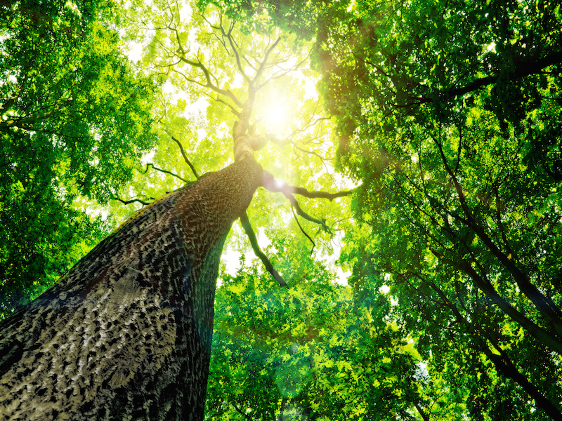Natural Healing: How Watching Trees Can Help You Soothe Your Soul
