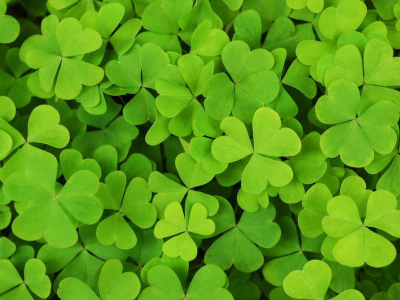 How To Bring Luck Into Your Life