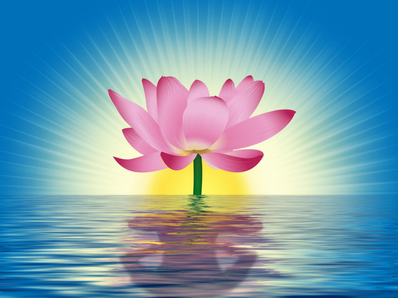The meaning of the lotus flower meditation relax club the meaning of the lotus flower mightylinksfo